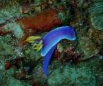 diving in Puerto Galera Philippines (1)