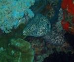 diving in Puerto Galera Philippines (13)