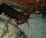 diving in Puerto Galera Philippines (14)