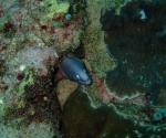 diving in Puerto Galera Philippines (3)