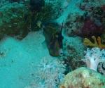 diving in Puerto Galera Philippines (8)