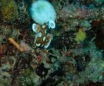 diving in Puerto Galera Philippines (9)