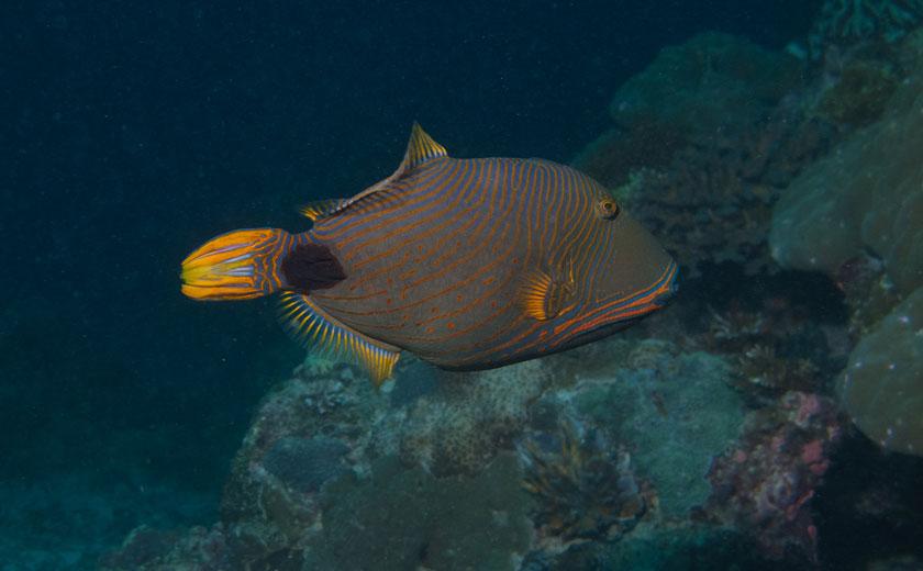 fish bowl scuba diving site puerto galera