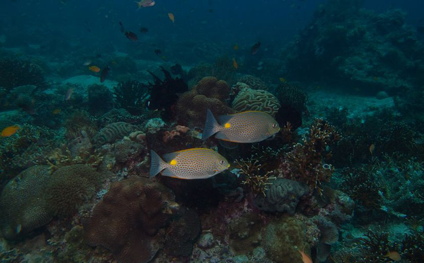 scuba diving puerto galera kilima drift